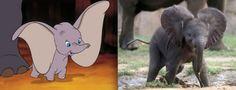 Personagens desenhos Disney na vida real - AC Variedades