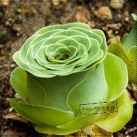 Online Shoping for Popular sedum flowers | Aliexpress Mobile
