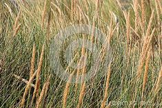 Close up of fronds on green sea grass on sunny day.