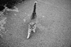 Cat Cat, Adorable Animals, Wordpress, Black And White, Blog, Pictures, Photographers, Monochrome, Animales