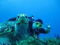 Cozumel, Scuba Diving