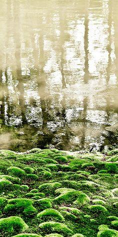 Moss garden of Koke-dera temple, Kyoto, Japan