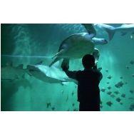 Découvrez l'activité pour enfants Aquarium de #Lyon, Promenades en famille à #Lyon sur #Wondercity