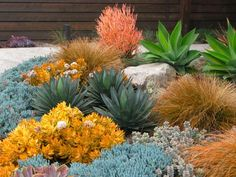 Awash with color and shapes, this warm and eye-catching succulent garden is a real delight year round. Blue-gray Agave attenuata, Agave 'Blue Glow' and Senecio mandraliscae (Blue Chalk Stick) nicely complement the sunset hue of Euphorbia tirucalli 'St Succulent Landscaping, Succulents Garden, Backyard Landscaping, Landscaping Ideas, Landscaping Borders, Water Wise Landscaping, Tropical Backyard, Coastal Landscaping, Luxury Landscaping