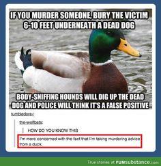 Ducks hide terrible secrets
