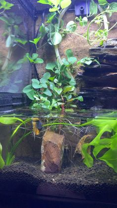 Aquarium Terrarium, Betta Aquarium, Planted Aquarium, Fish Tank Terrarium, Aquarium Garden, Aquarium Landscape, Tropical Fish Aquarium, Tropical Fish Tanks, Betta Fish Tank