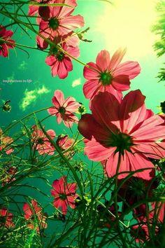 light thru petals, never not refreshing