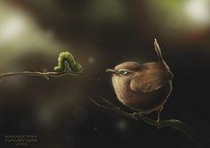 bird predators on Behance