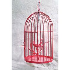 Free Bird Pendant Light in Watermelon