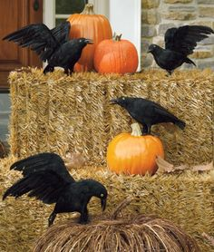 Black Crows so realistic, you'll expect them to take flight!