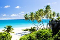 Miles of beautiful beaches await you in Barbados. Bask in the Caribbean sun on a luxury Barbados holiday with Best at Travel. Trip To Barbados, Barbados Beaches, Barbados Travel, Tropical Beaches, Barbados Honeymoon, Visit Barbados, Barbados Holidays, Local Beaches, Fiji Travel