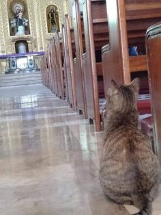 all creatures shall glorify God Kittens Cutest, Cats And Kittens, Cute Cats, Vizsla Puppies, Cute Puppies, Crazy Cat Lady, Crazy Cats, Animals And Pets, Cute Animals