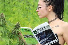 Hanf sei Dank auf der Insel - Erntedankfest in der Steiermark - In der romantischen Landschaft der schönen Südoststeiermark liegt ein Hanffeld. Ganz legal wird hier Nutzhanf angebaut, also Cannabispflanzen, die nur... Ganja, Harvest Party, Thanksgiving Holiday, Landscape, Plants