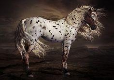 windswept ~ Chestnut Leopard native American Appaloosa art