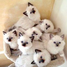 Kitty Cluster