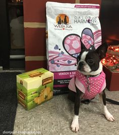 Sinead the Boston terrier is pretty excited to try these new products from Weruva. Can't you tell?