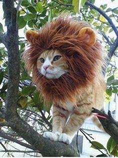 I wanna be a lion!