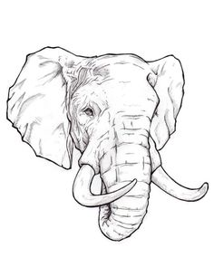 Find the desired and make your own gallery using pin. Drawn brain line drawing - pin to your gallery. Explore what was found for the drawn brain line drawing Animal Drawings, Pencil Drawings, Art Drawings, Realistic Drawings, Elephant Sketch, Elephant Drawings, Elephant Head Drawing, Elephant Design, Draw An Elephant