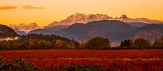 fall sunset looking to Pitt meadows, bc, Canada with blueberry fields in the foreground.
