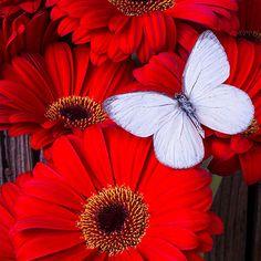 Алмазная вышивка, цветы и бабочка