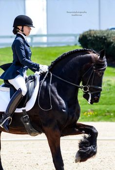 Friesian demo Rolex 2014