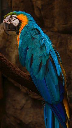 parrot wallpaper by - 23 - Free on ZEDGE™ Tropical Birds, Exotic Birds, Colorful Birds, Colorful Feathers, Pretty Birds, Beautiful Birds, Animals Beautiful, Beautiful Pictures, Bird Pictures