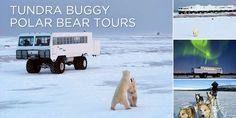 Polar Bear Tours in Canada
