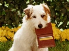 Pet Home Alone Card Ideal For Emergencies