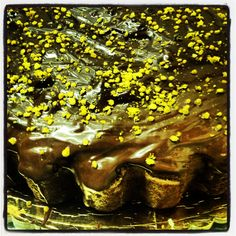 Cuban Chocolate from Baracoa Tart with Bee Pollen