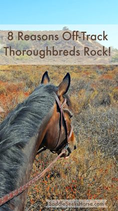 Ex-racehorses are excellent horses (and not just for jockeys!) Although there are about 8,000 reasons off-track Thoroughbreds are cool, here is sampler list of just eight.