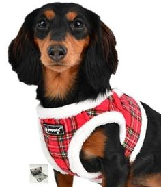 Blitzen Quilted Plaid Jacket Vest Harness - Color Holiday Red Plaid