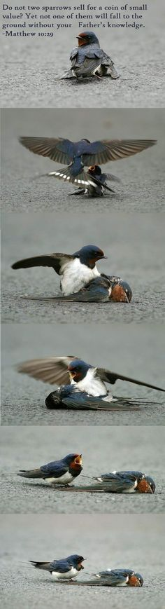 """Another wrote: """"A female sparrow is injured on the road, her mate tries to keep her alive by tending to her and bringing her food. She is too badly injured and dies. He is shocked by her death and tries nudging her to wake her up.He stands by her side broken hearted, calling and crying for help. He is devastated by her death. Finally realizing that she will never return to him, he stands beside her lifeless body with great sadness and sorrow, unable to leave her side."""""""