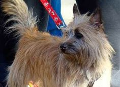 Col. Potter Cairn Rescue Network: Baby Girl Star will Shine at Col. Potter!