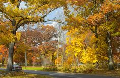 Fall Colors, New Jersey