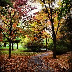 The Arboretum, full of fall colors. by student Hannah Hamlin. #GVFall
