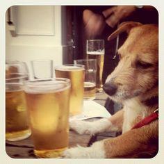Eric (Jack Russell/ Patterdale Terrier cross)