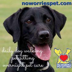 23 best pet sitter \u0026 dog walker promotional videos images dogpet sitting, baseball games, lehigh valley, vacation, labrador retriever,