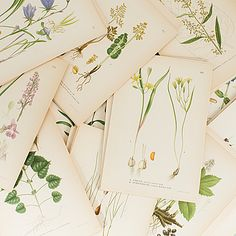 "LITOGRAFISKA TRYCK, ""Nordens flora"". C.A.M Lindman, 1900-talets fösta hälft."