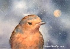 """""""Winter Robin"""", watercolor bird painting by animal artist Teresa Silvestri.  Original available, in addition to fine art prints & cards.  Photo reference thanks to Albert Horsborough."""