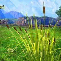 FETER LE ROSEAU : on dit aussi que le ROSEAU est fêté Du 28 octobre au 24 novembre, vous êtes… Roseau (Ngetal) ? Arbre de la nymphe Philyra, fille d'Okeanos. Son fils, le centaure Chiron, fut un illustre guérisseur