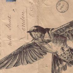 Birds Illustrated on Vintage Envelopes by Mark Powell paper illustration birds (potential tattoo inspiration)