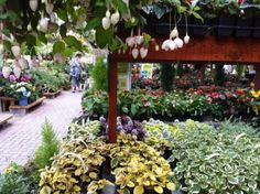 Centre jardin | LeVert Paysage | Laurentides | Mont-Tremblant | botanix | Flowers | garden center | fuschia
