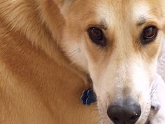 Eli aka Deer Dog or Dingo