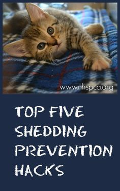 Check out these five #Hacks for #shedding prevention in #pets.  http://www.nhspca.org/blog/top-5-pet-sheddingprevention-hacks/