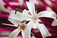 flor branca7926 | Flickr - Photo Sharing!