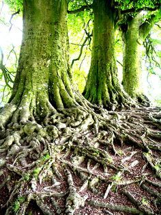 1000+ images about If A Tree Could Wander... on Pinterest | Trees ...