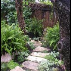 stone Pathway with ferns