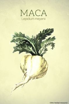 Maca (Lepidium meyenii)