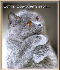 """Photo from album """"Коты"""" on Yandex. Animals And Pets, Baby Animals, Funny Animals, Cute Animals, Funny Cats And Dogs, Cats And Kittens, I Love Cats, Cute Cats, Kitten Cartoon"""