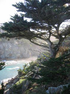 Big Sur Tourism: 26 Things to Do in Big Sur, CA | TripAdvisor